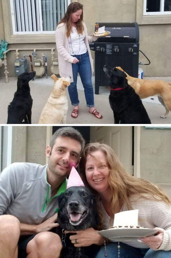 Щороку ця собака святкує його зі своїми подругами