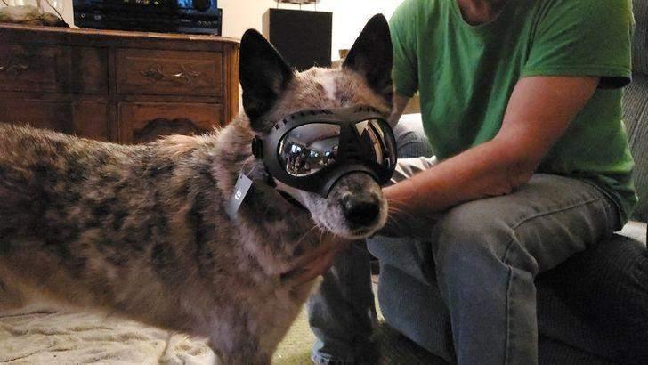 Тому батько власника подарував йому захисні окуляри