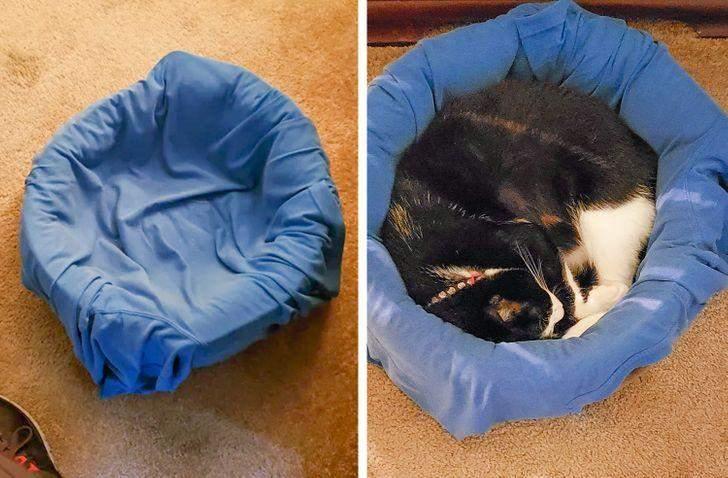 Если кот не спит в своей кроватке, просто положите туда свою рубашку или футболку