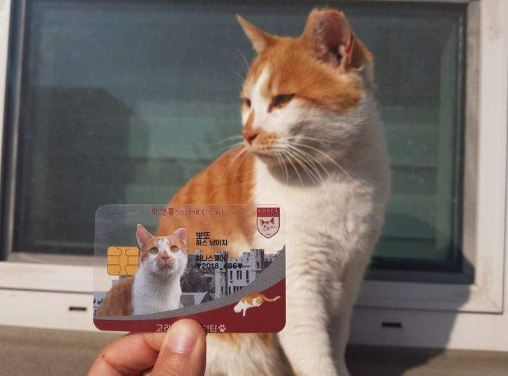 Студенти зробили її для котика, який мешкає на території університету