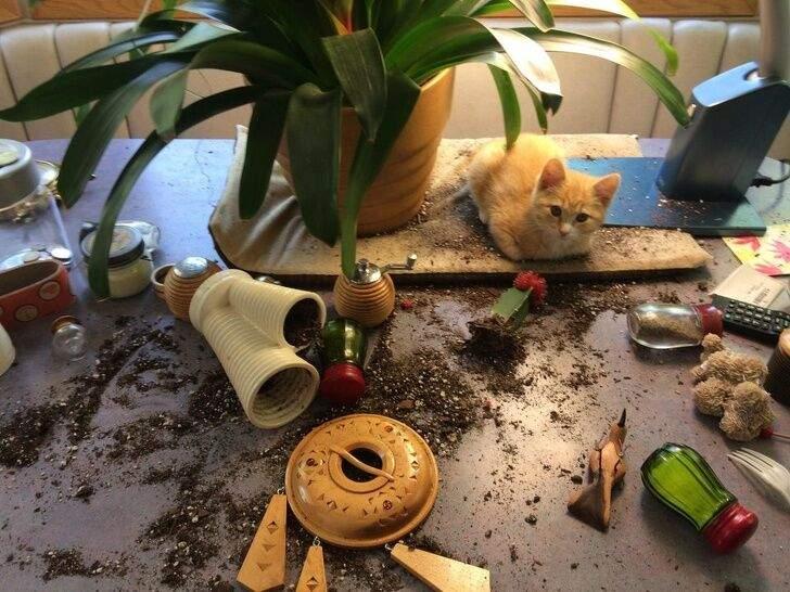 Кошка маленькая, а беспорядок сделала большой