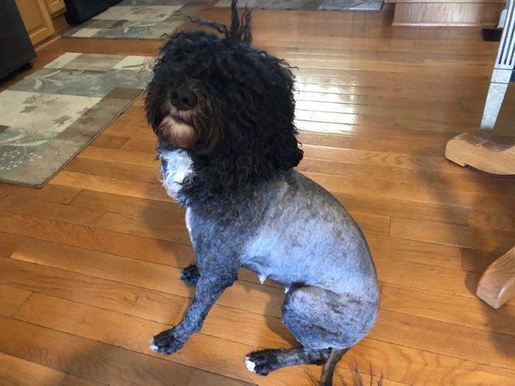 Коли вирішив самотужки підстригти собаку