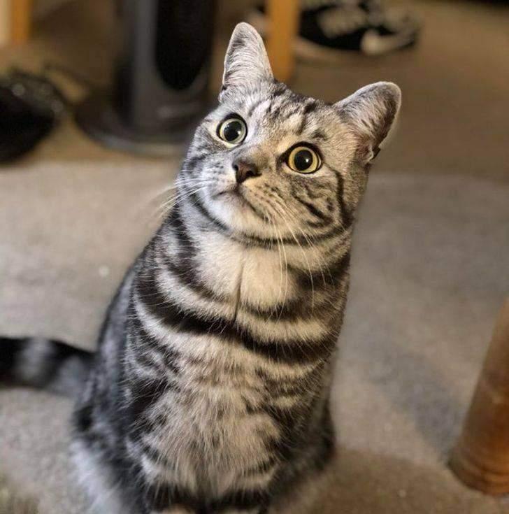 Кіт почув, як його господар чхнув