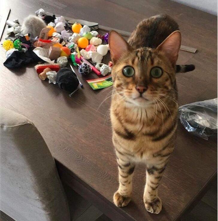 Только посмотрите на морду кота, когда из-под дивана достали все его сокровища