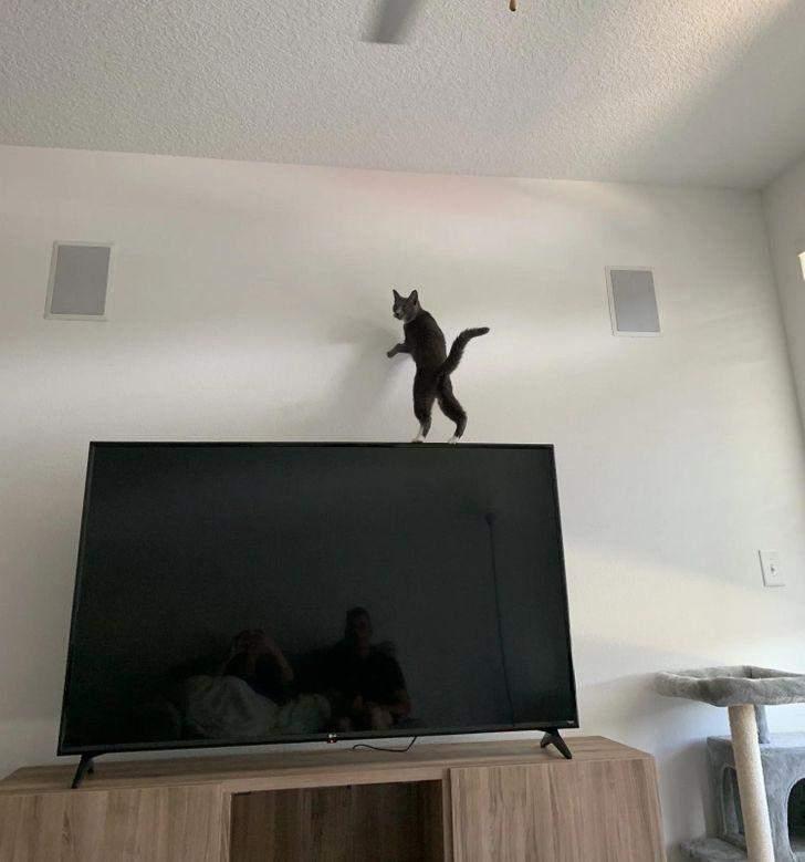 Телевізор точно не призначений для таких прогулянок