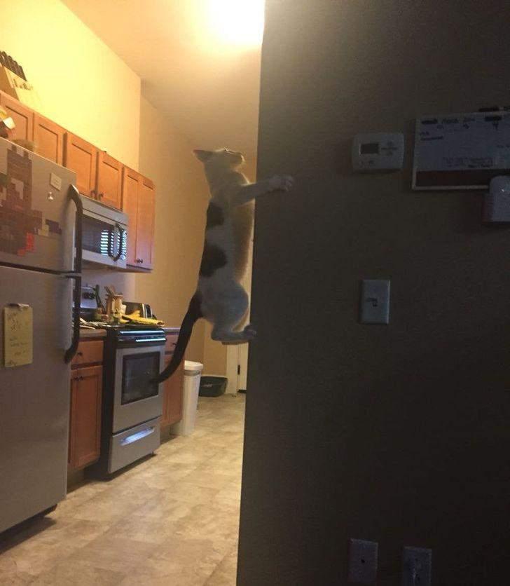 Просто стандартний день кота
