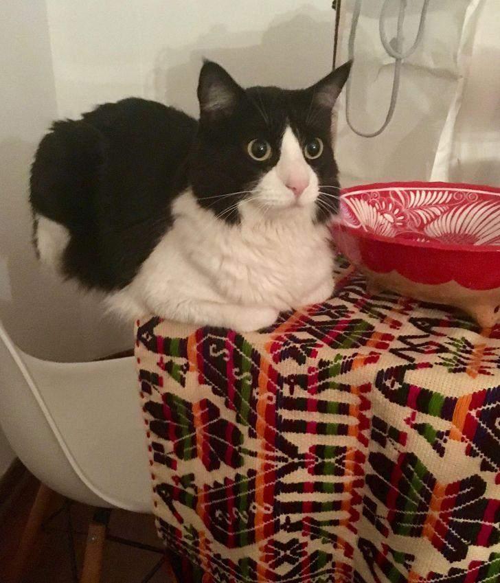 Цей кіт заперечує гравітацію