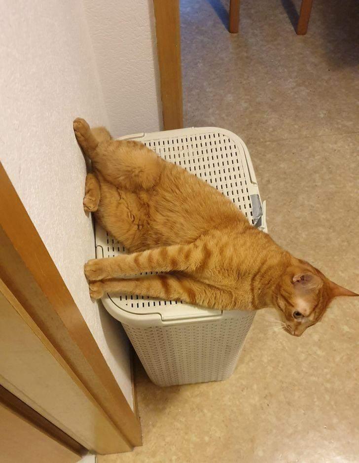 Цей кіт не бачить нічого дивного у своєму способі відпочинку
