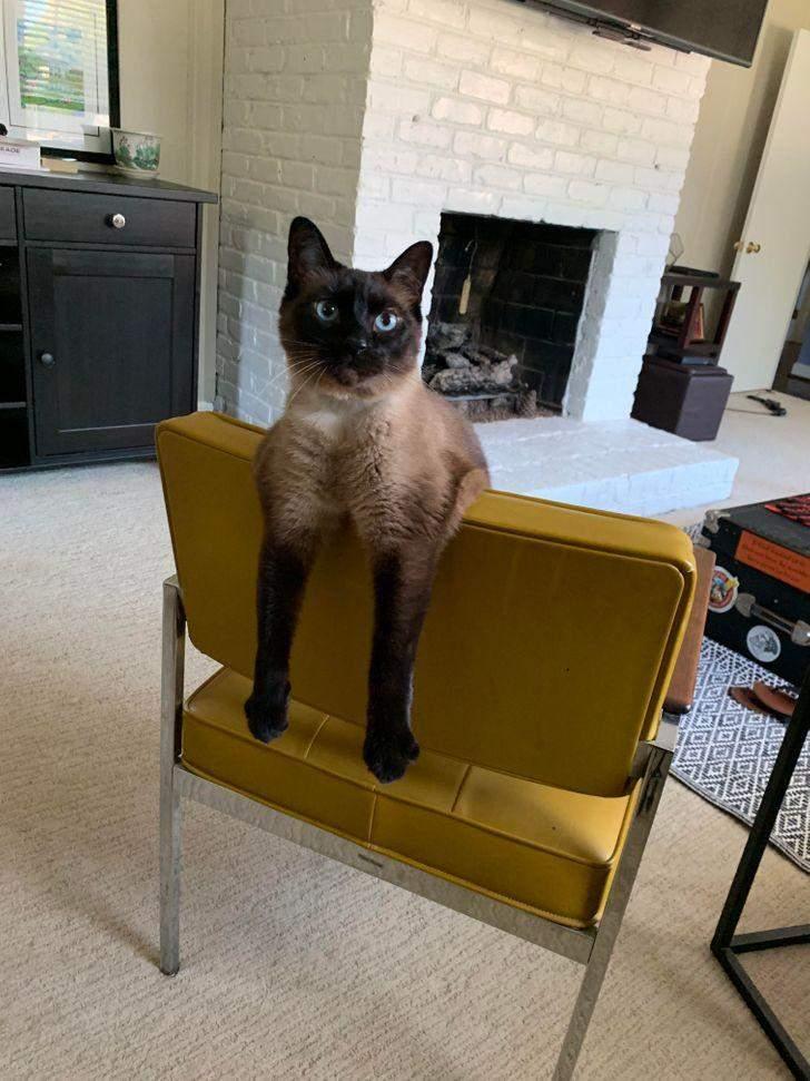 Цей кіт постійно так сидить