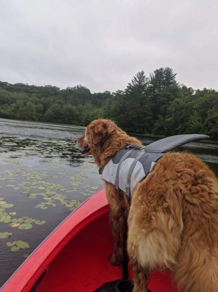Власниця купила її, щоб плавати зі своїм найкращим другом