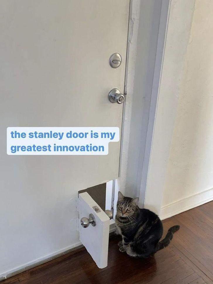Хлопець сам зробив для свого котика ці милі дверцята