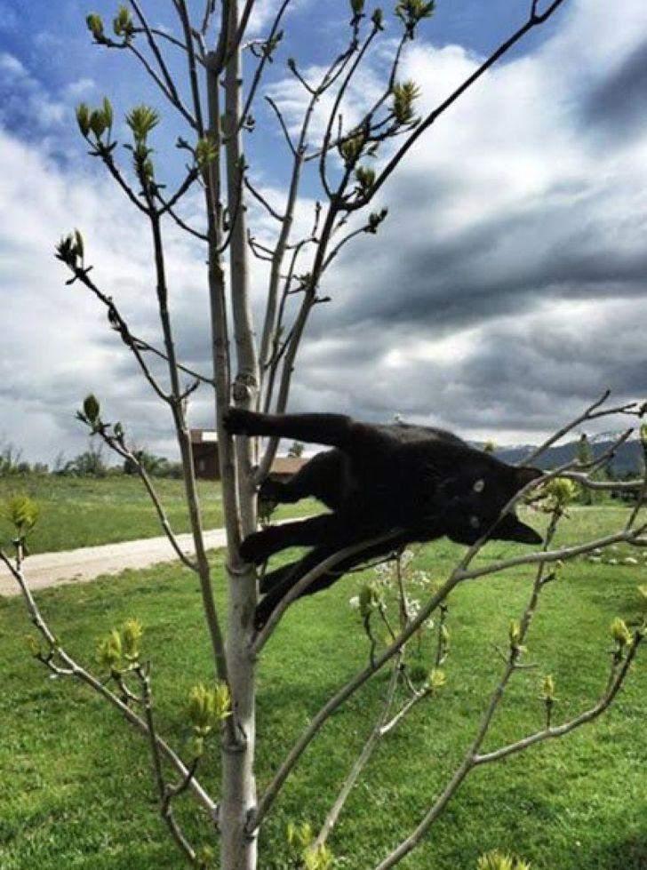 Закони гравітації не діють і на цього кота