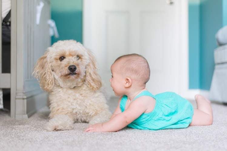 Собака і маленька дитина