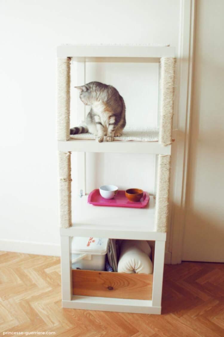Кішки полюбляють сидіти на висоті