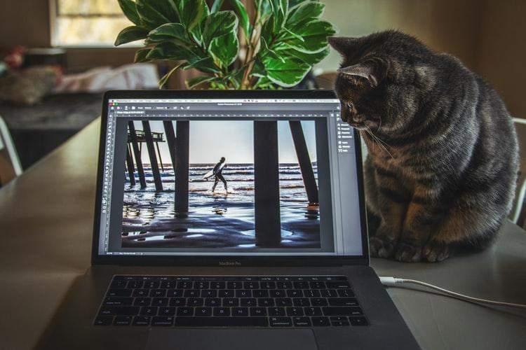 Кіт біля ноутбука