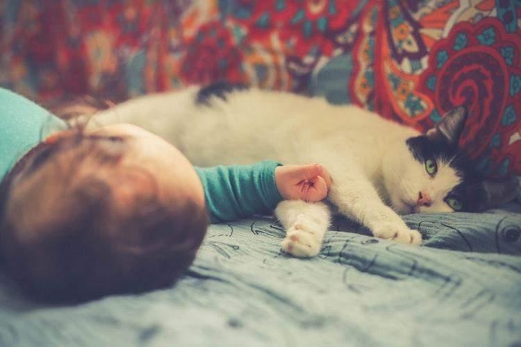Кіт і немовля