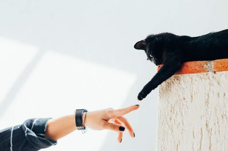 Кошка на высоте