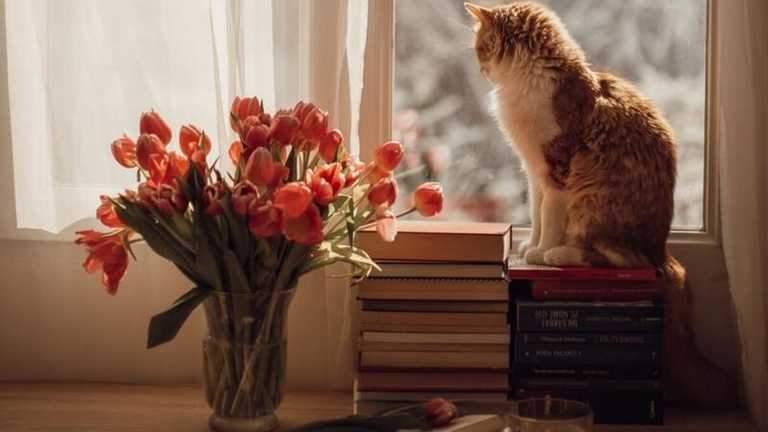 Кіт на вікні
