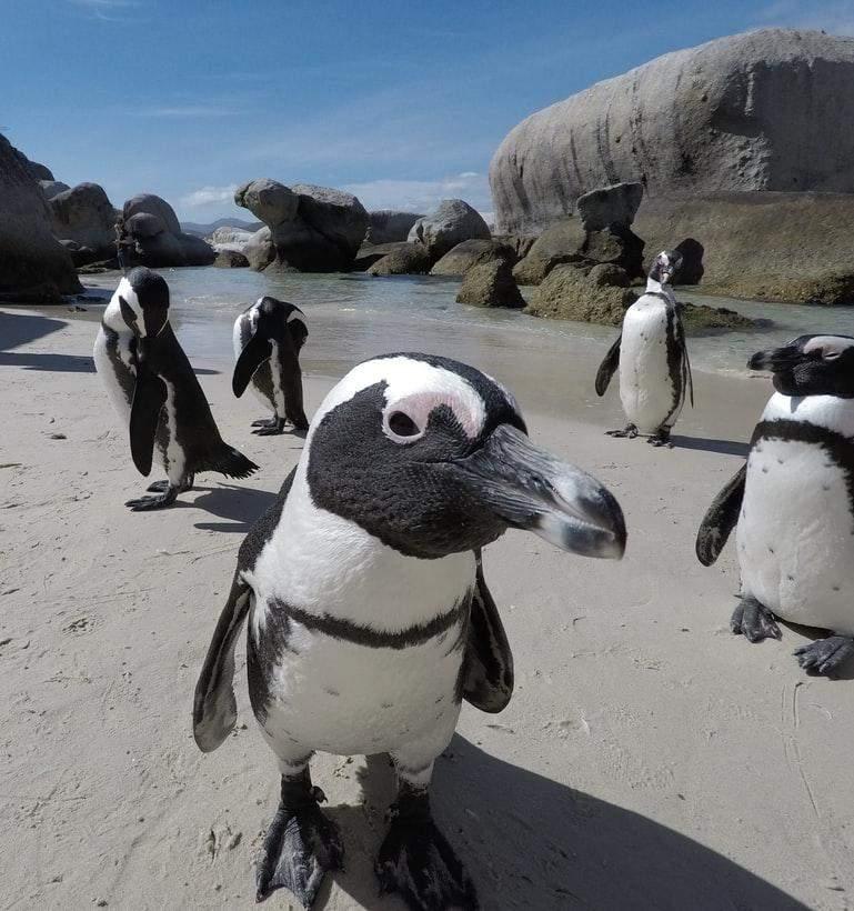Пингвинов считают одним из символов Антарктиды