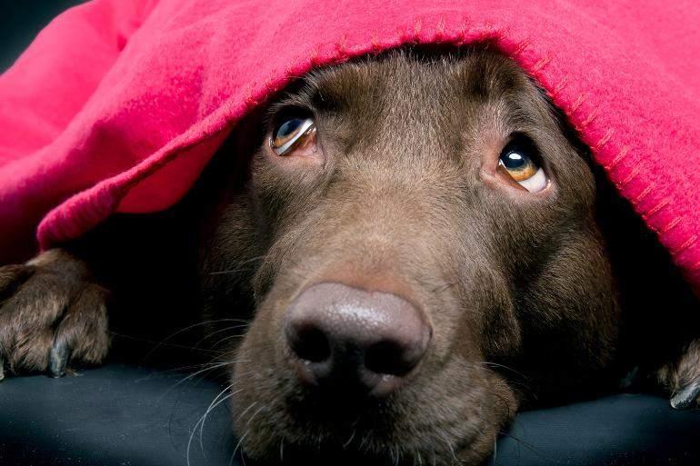 Якщо собака чогось боїться, будьте з нею та заспокоюйте її