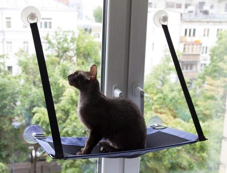Можна встановити на вікно спеціальну поличку для кота