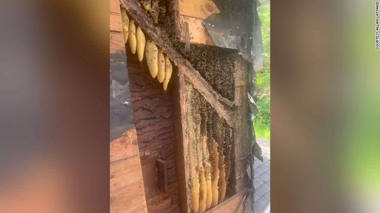 Бджоли проживали у будинку близько 35 років / Фото Allan Lattanzi CNN