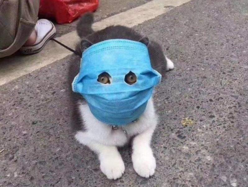 кіт у масці