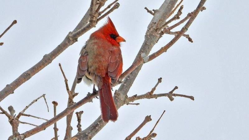 За кольором птаха вдалося виявити його унікальність