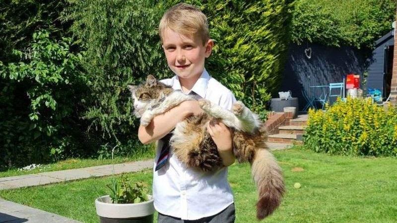 7-річний Ремі називає повернення кота дивом