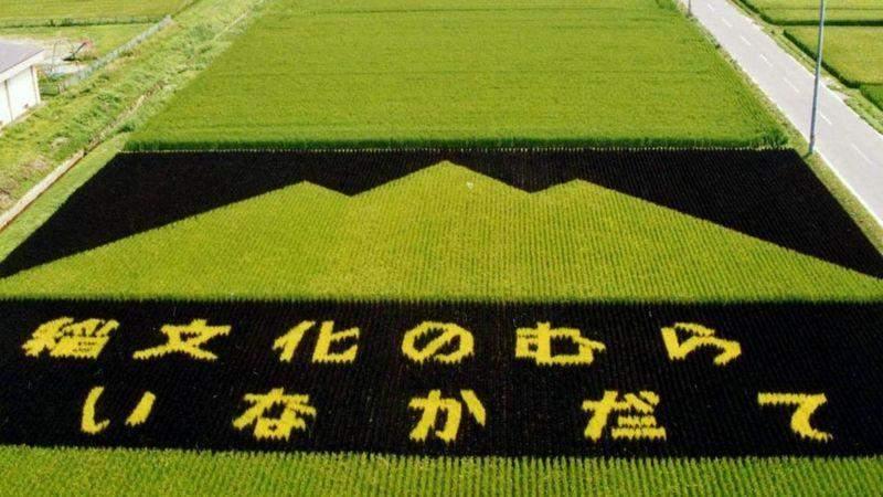 Гора з рису