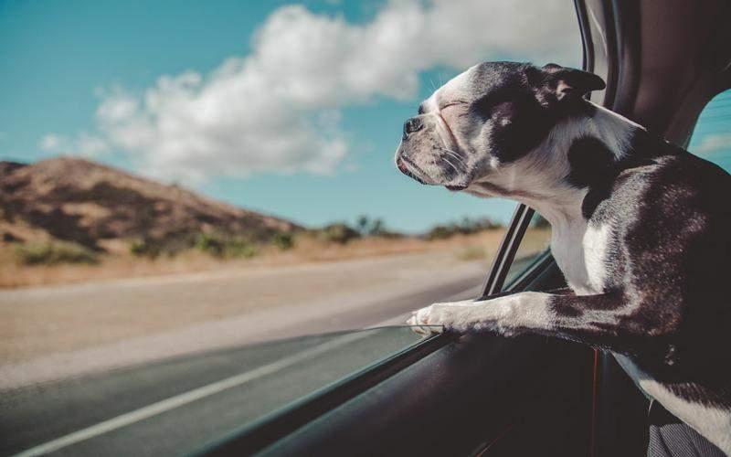 Нельзя оставлять любимца одного в машине даже с открытым окном