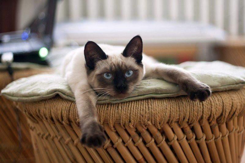 Советы для тех, у кого в квартире живет кот