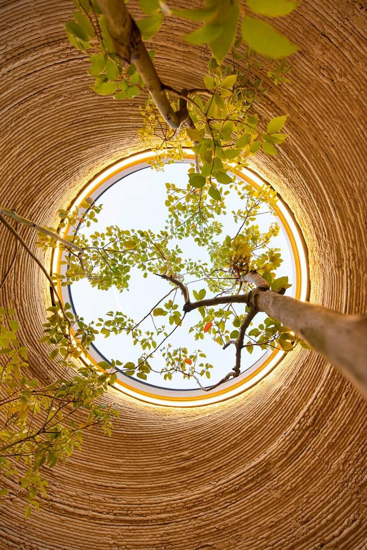 дерево в середині будинку