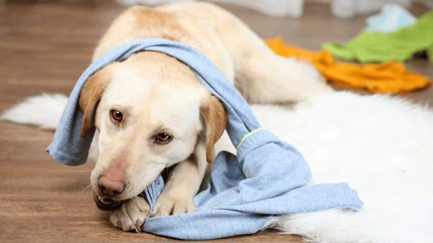 Нужно убрать все, что собака может разгрызть
