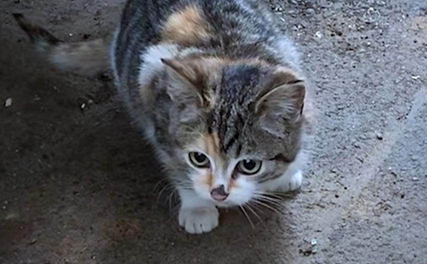 Кошеня жило в сміттєвому баці