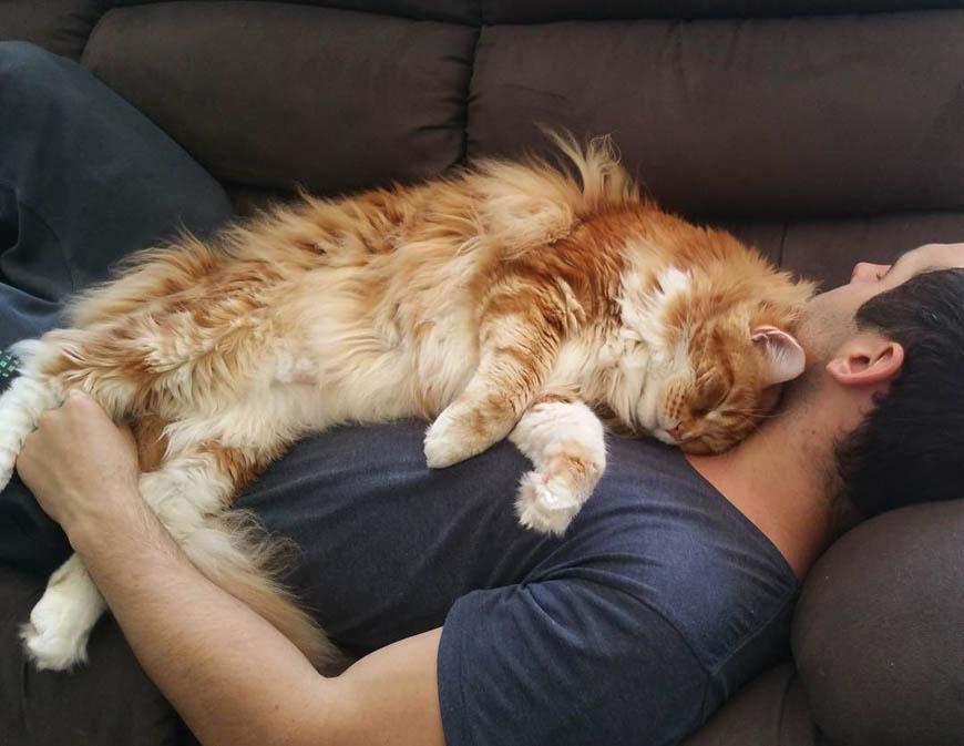 Коты часто любят спать на человеке