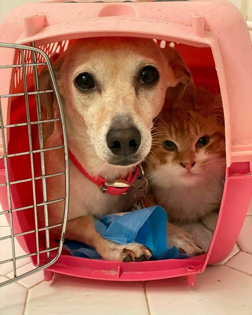 Собака помогает перевозить малышей