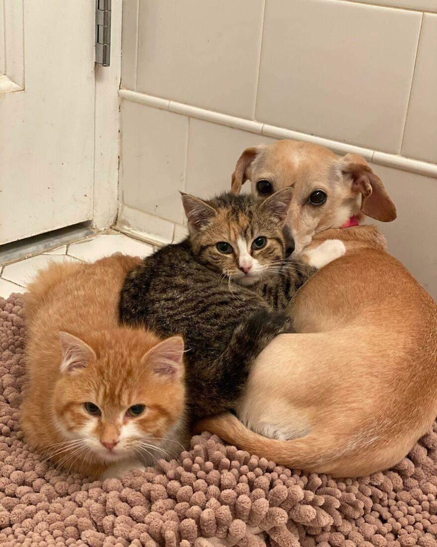 Котята нуждаются социализации