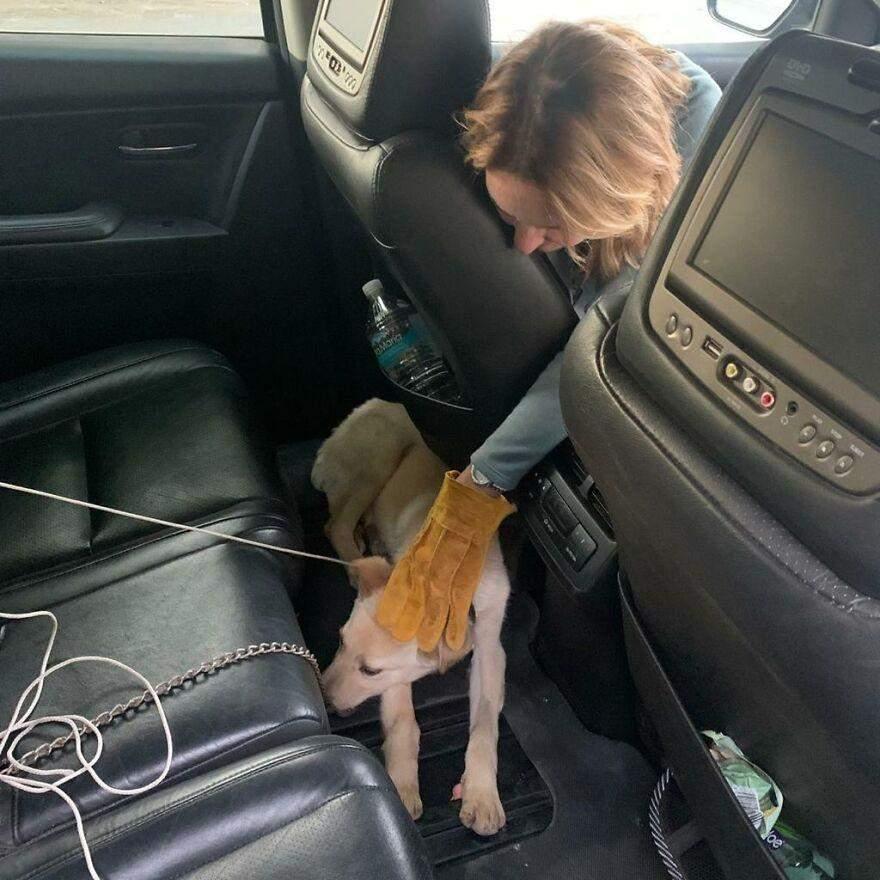 В машині Бостон хотів заховатися під сидіння