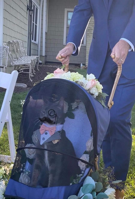 Представницький весільний кіт став зіркою мережі