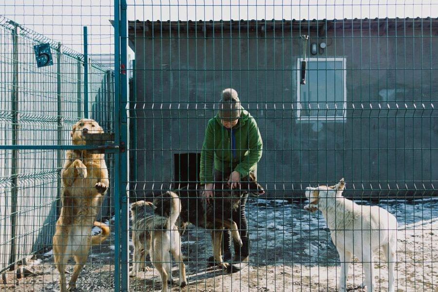 В приюте проживает 167 собак