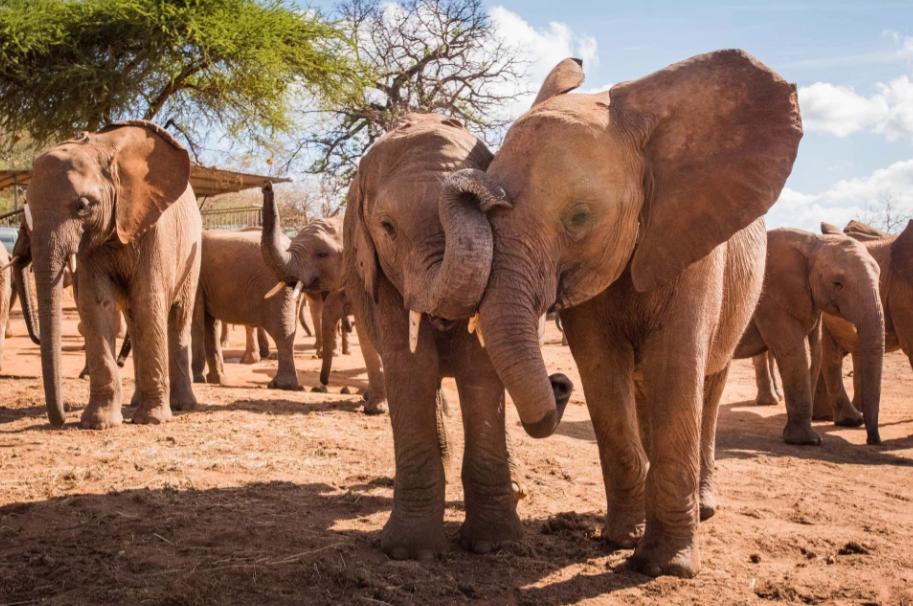 2 слона радуются жизни
