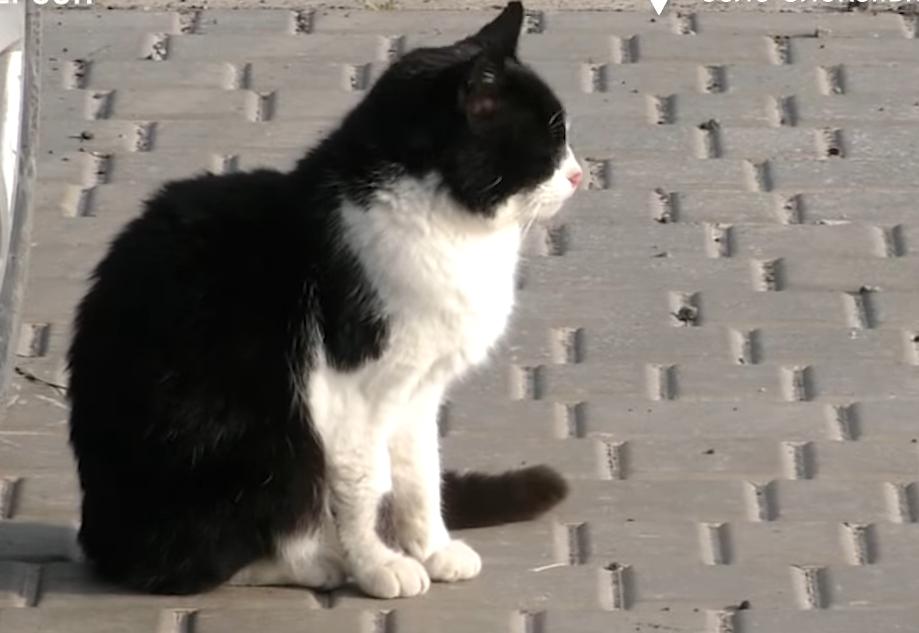 Коты помогают бороться с мышами