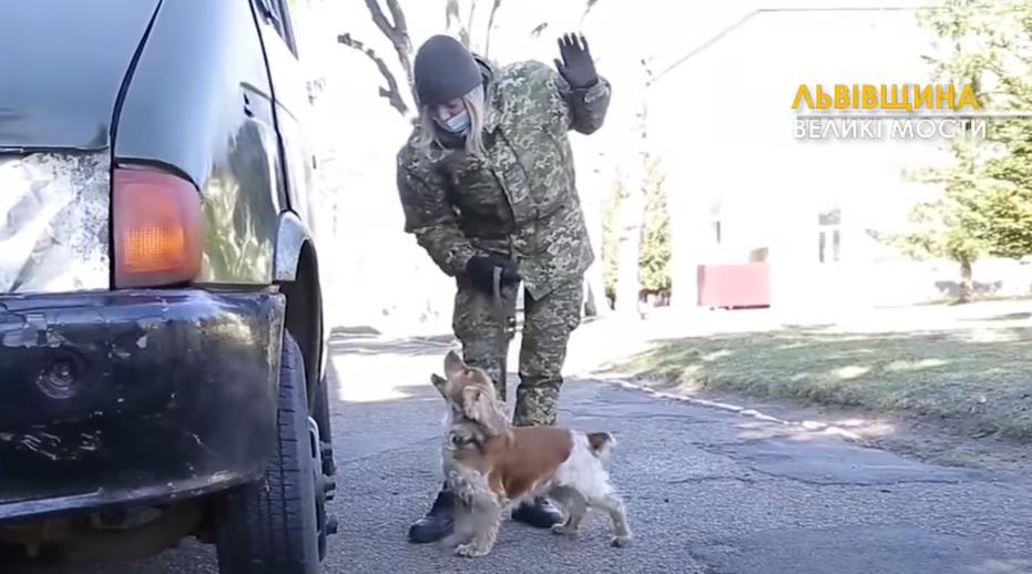 Эту собаку обучают искать табак в автомобилях
