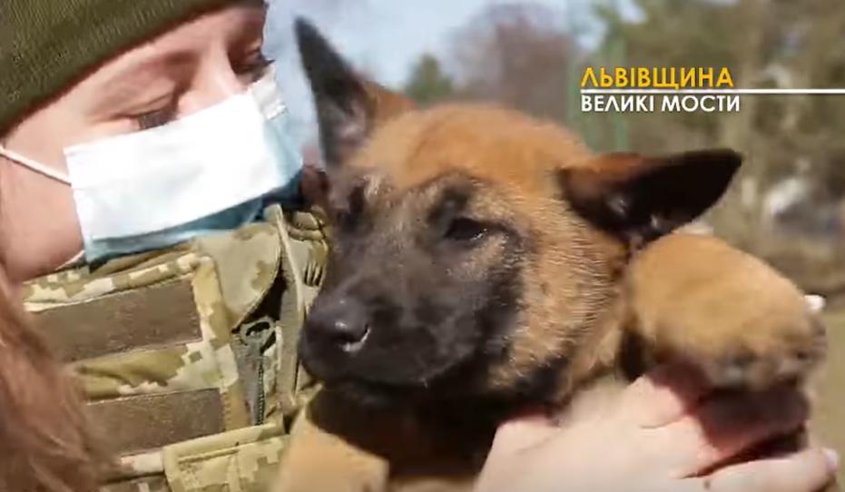 Уже в 2 месяца понятно, к которой подготовке способен щенок