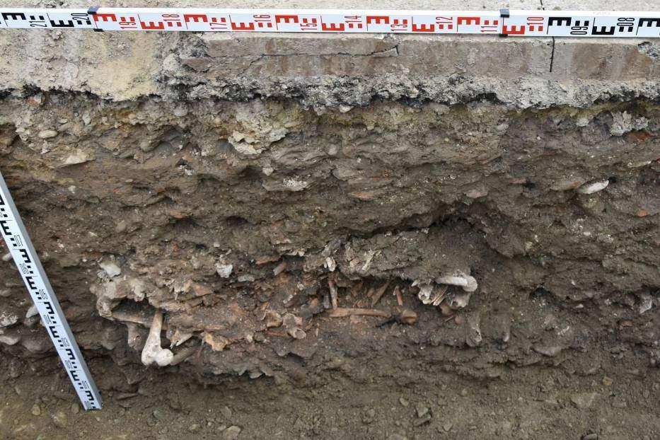 розкопки архелогічні розкопки