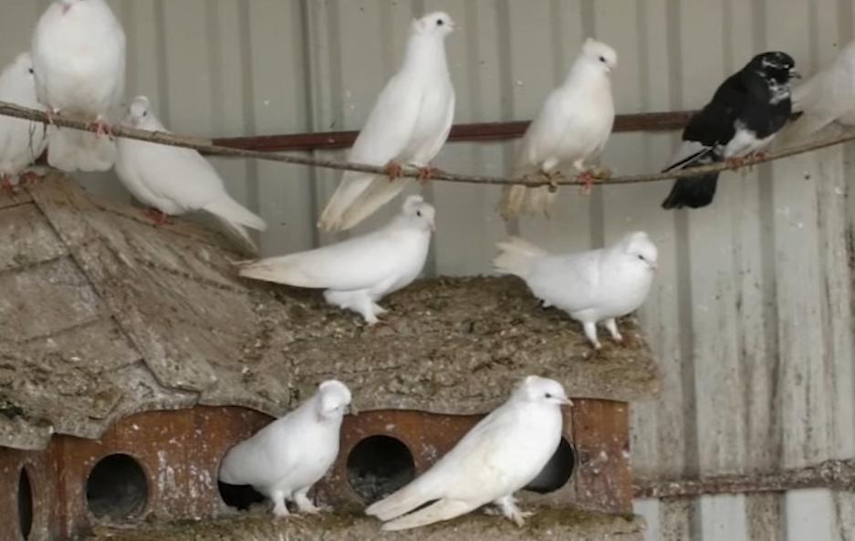 Корм для птиц привлекает грызунов, поэтому без труда котиков не обойтись