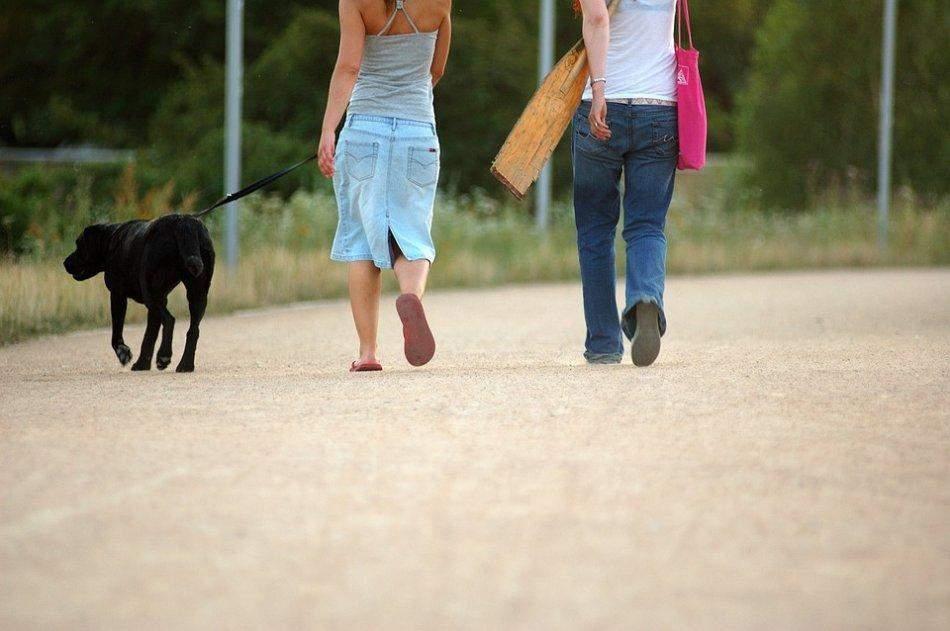 Чем дольше вы гуляете с собакой, тем лучше