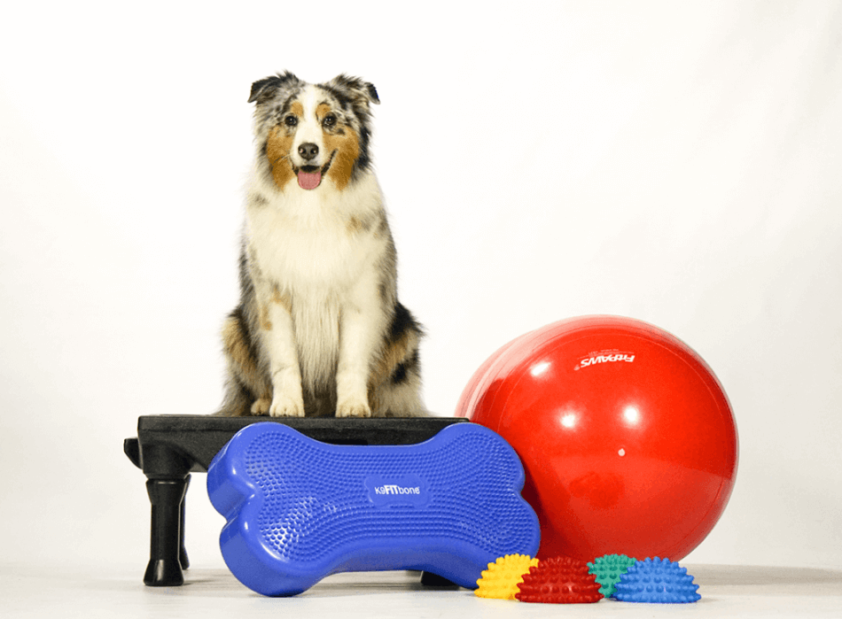 Дог-фітнес допомагає розвивати собаку фізично та інтелектуально