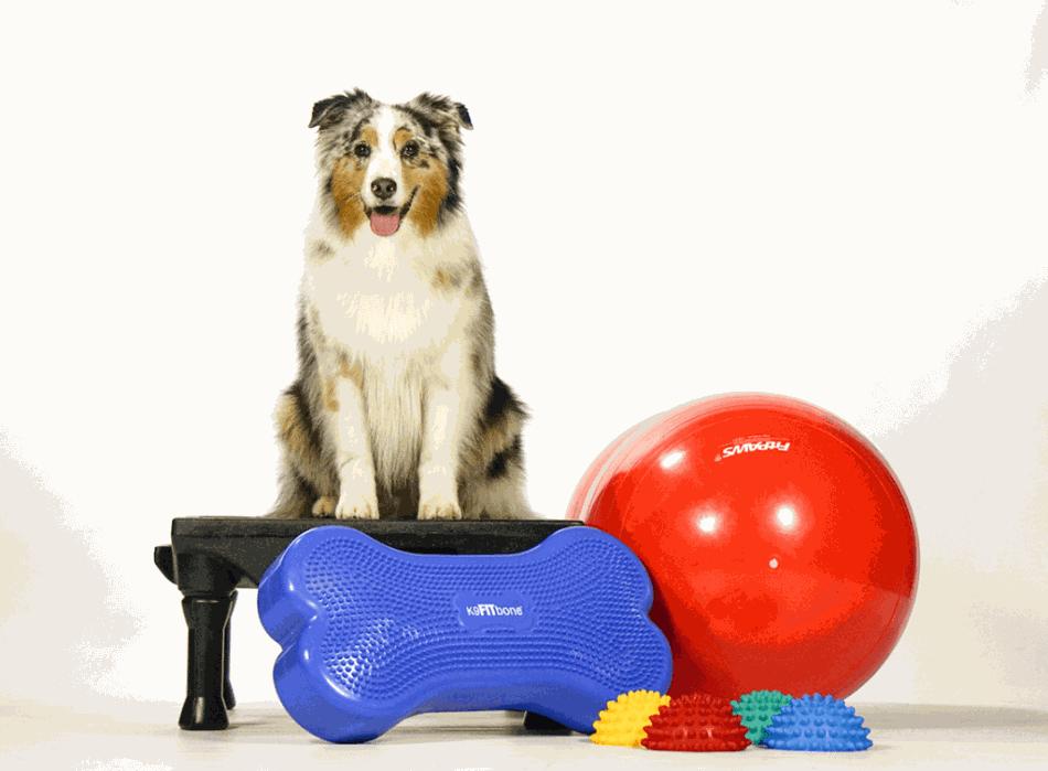 Фітнес допомагає собаці розвиватися гармонійно